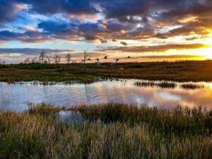 Fixing the Everglades